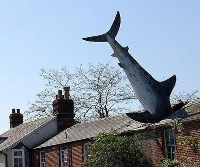 Shark attack home extension
